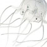 box-jellyfish-24-eyes-1536
